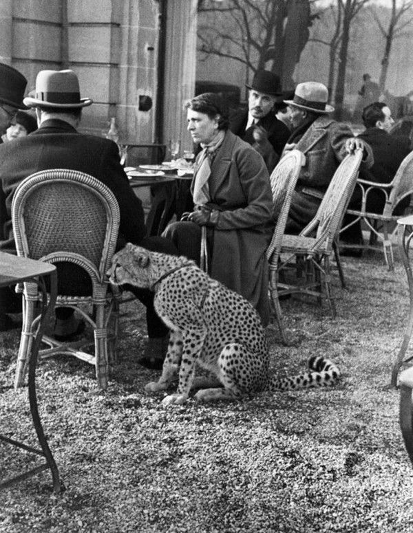 Black White Vintage Photography Alfred Eisenstaedt Woman Sitting With Her Pet Cheetah Having Tea At A Bois De Vintage Tn Leading Vintage Magazine Featuring Best Vintage Inspiration
